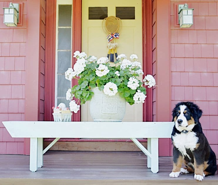 Vintage badmitton wreath with bernese mountain dog and flowers front door.