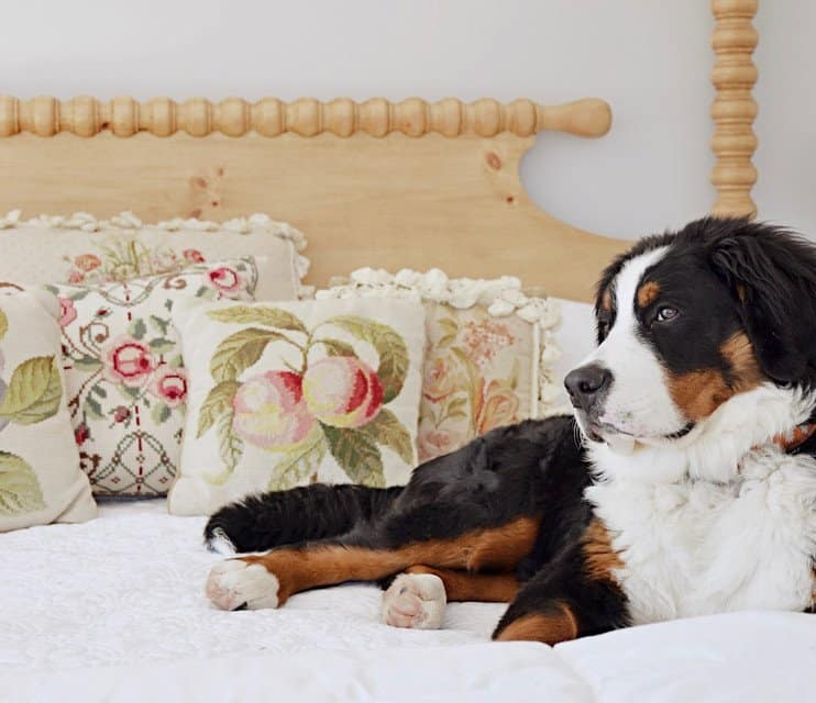 Vintage needlepoint pillows on canopy bed with Bernese Mountain Dog.