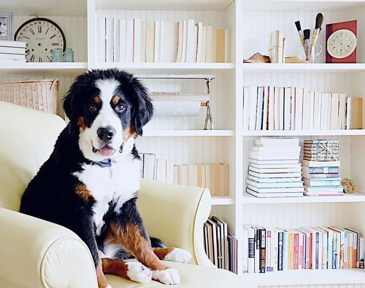 BUILTIN SHELFIE DECOR WITH BERNESE MOUNTAIN DOG