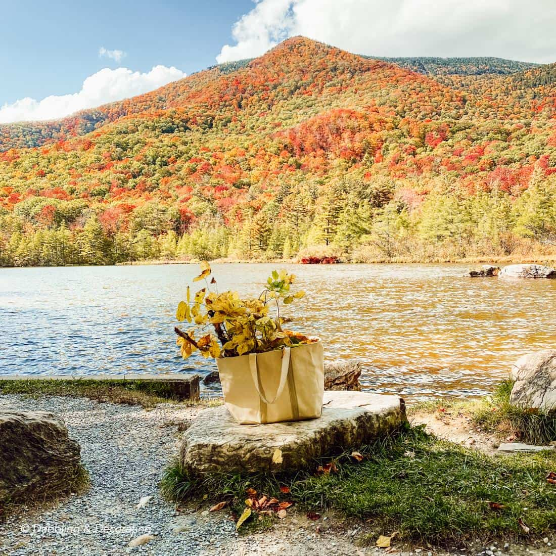 A bag of leaves in front of the fall mountains