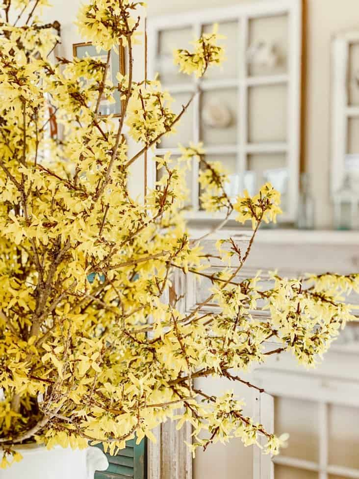 Forsythia Bouquet