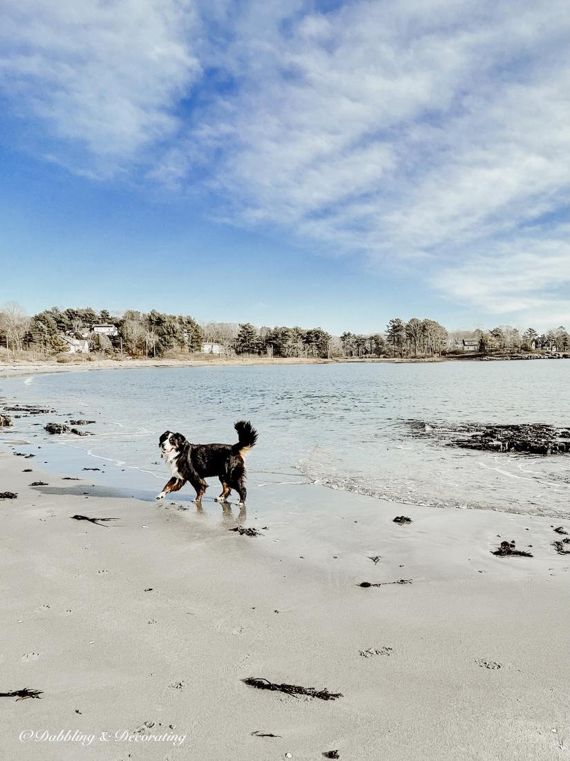 A dog walking on a beach
