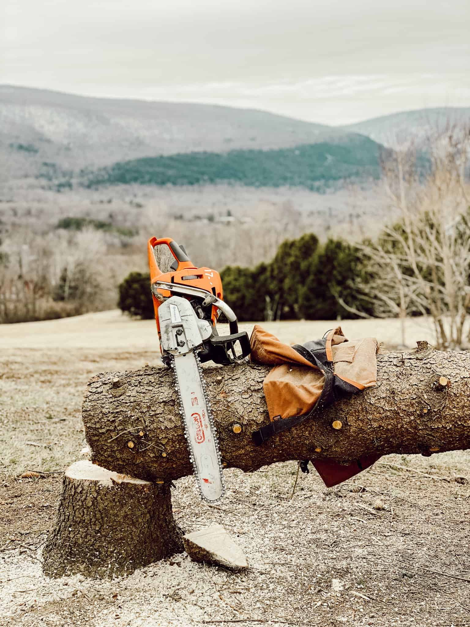 An electric saw on a tree