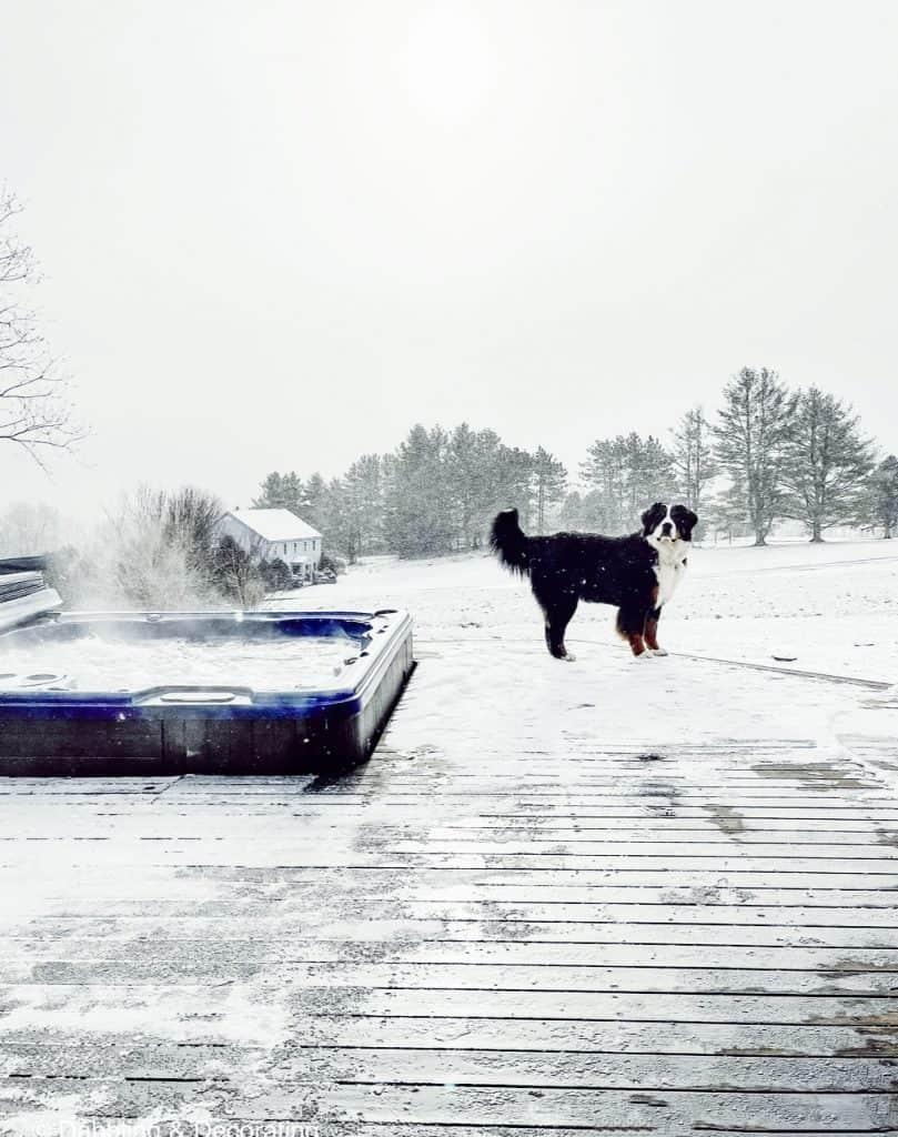 Hot tub mountain views with bernese mountain dog.