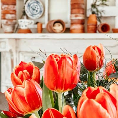 Spring Tulips and Terracotta Pots