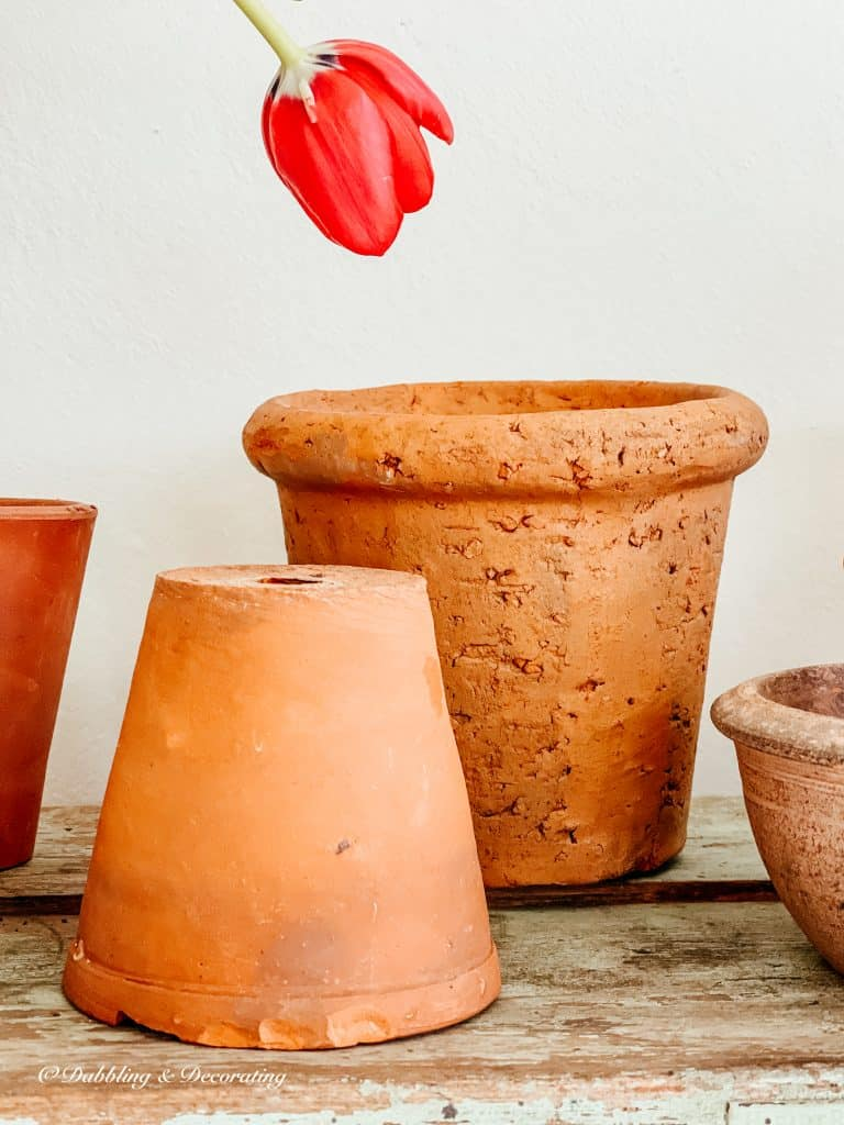 terracotta pots and a tulip.
