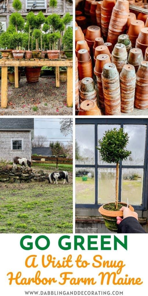 Go Green A Visit to Snug Harbor Farm Maine
