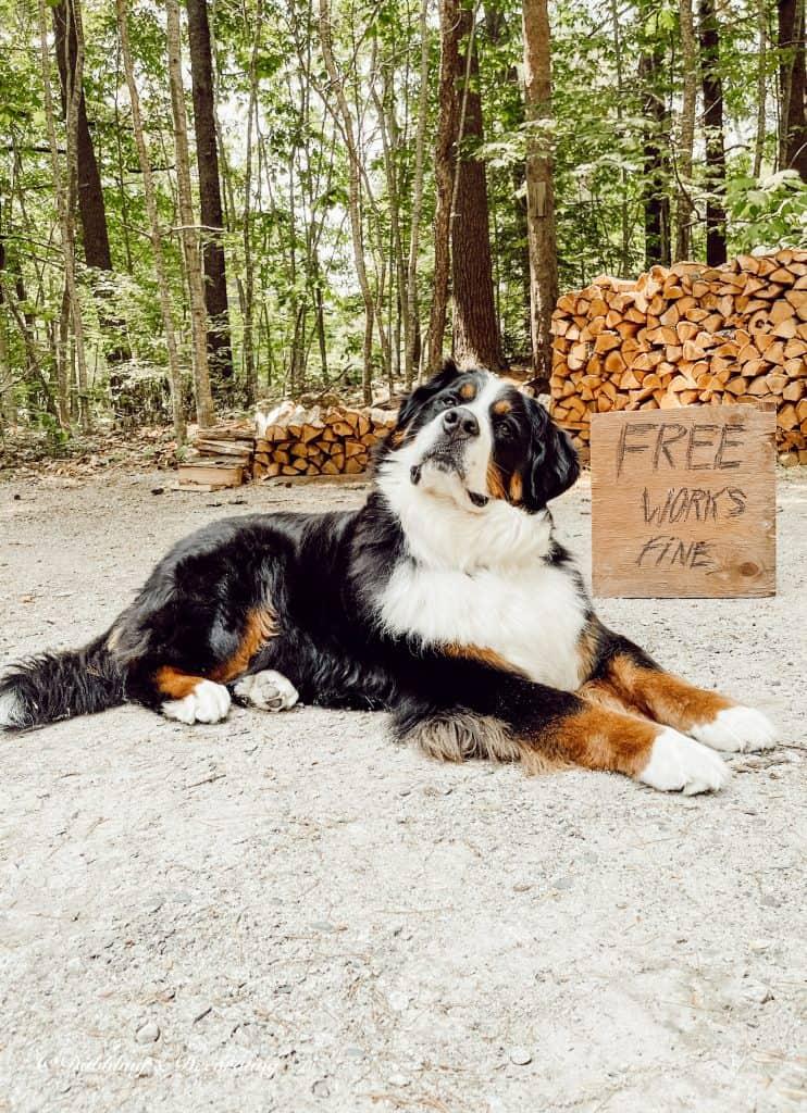 Yard Sale Sign and Ella, the Bernese mountain dog.