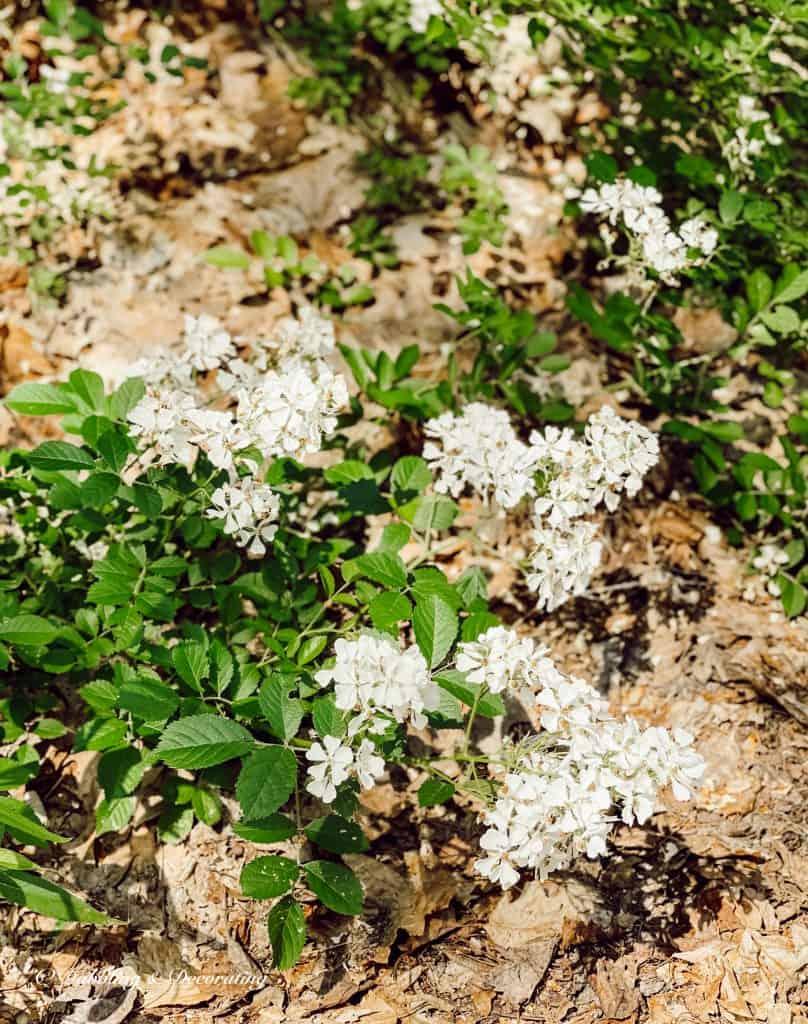How to Create Beautiful Summer Weed Arrangements