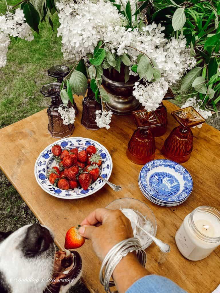 Strawberries and Ella, the Berner