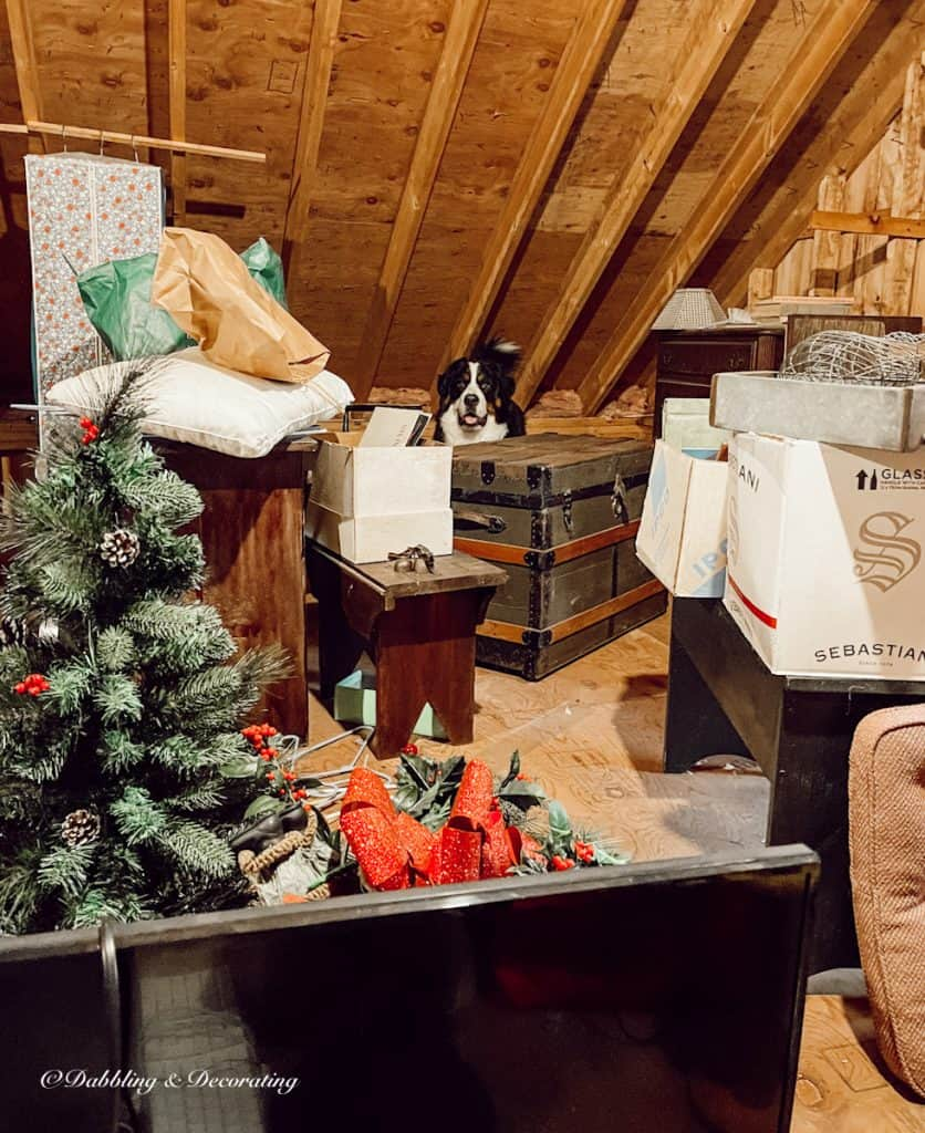 Trunk and dog in attic