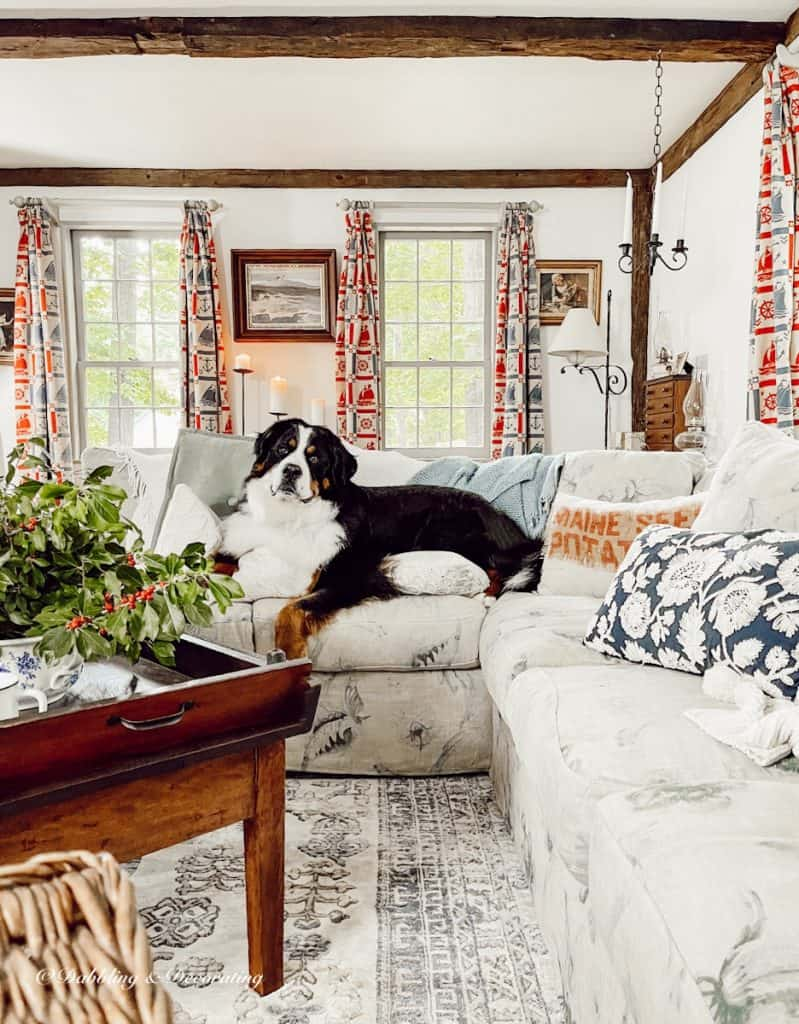 Living Room with Bernese Mountain Dog